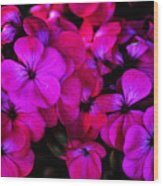 Hot Pink Florals Wood Print