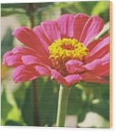 Hot Pink Flower In Frankemuth Michigan Wood Print