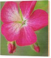 Hot Pink Geranium On A Brilliant Summer Day Wood Print