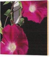 Hot Pink Glories Wood Print