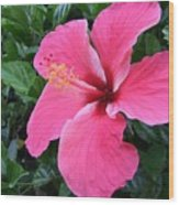 Hot Pink Hibiscus 1 Wood Print