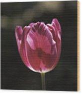 Hot Pink Tulip Squared 02 Wood Print