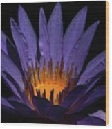 Hot Purple Water Lily Wood Print