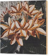 Hothouse Flowers Wood Print