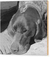 Hound Dog Wood Print