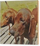 Hounds Wood Print