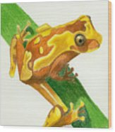 Hourglass Frog Wood Print