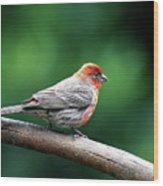 House Finch . 40d7227 Wood Print