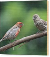 House Finch Courtship Wood Print