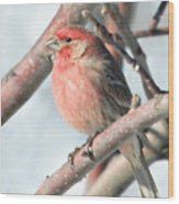 House Finch In An Apple Tree Wood Print