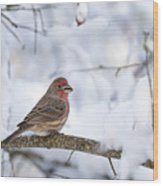 House Finch In Snow Wood Print
