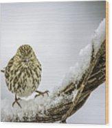 House Finch Snow Is Coming Wood Print by LeeAnn McLaneGoetz McLaneGoetzStudioLLCcom