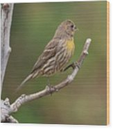 House Finch With Yellow Breast 1  Wood Print