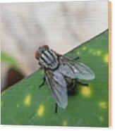 House Fly On Leaf Wood Print