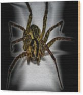 House Spider Wood Print
