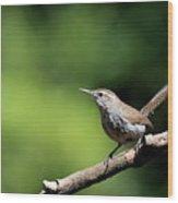 House Wren . 40d8055 Wood Print