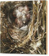 House Wren Family Wood Print