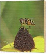 Hoverfly On Brown Eyed Susan Wood Print