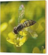Hoverfly On Yellow Flower Wood Print