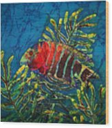 Hovering - Red Banded Wrasse Wood Print