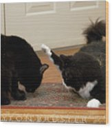 How Cat Fights Start Wood Print