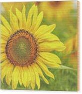 How Do You Dew, Sunflower Wood Print