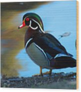How Much Wood Could A Wood Duck Chuck Wood Print