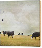 How Now Black Cow Wood Print