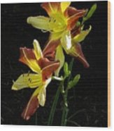 Howdy Pardner Watercolor Wood Print