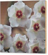 Hoya Bella Bloom Wood Print