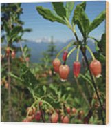 Huckleberry Flowers Atop Huckleberry Mountain In Glacier National Park Montana Wood Print