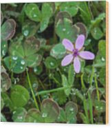 Huge Beauty In A Small Wildflower Wood Print
