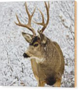 Huge Buck Deer In The Snowy Woods Wood Print