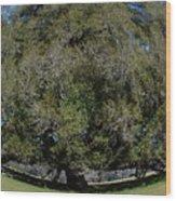 Huge Live Oak Fisheye Wood Print
