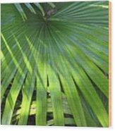 Huge Palm Leaf Wood Print