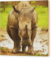 Huge South African Rhino Wood Print by Anna Om