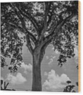 Huge Tree 12 Wood Print