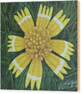 Huisache Daisy Wood Print