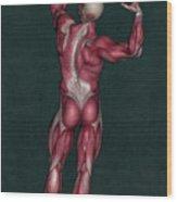 Human Anatomy 20 Wood Print
