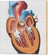 Human Heart Anatomy, Artwork Wood Print by Jose Antonio PeÑas