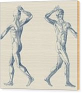 Human Muscular System - Dual View - Vintage Anatomy Poster Wood Print