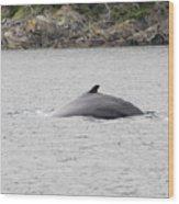 Humpback Whale 5 Wood Print