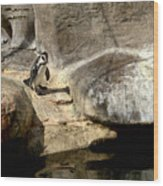 Humboldt Penguin 1 Wood Print