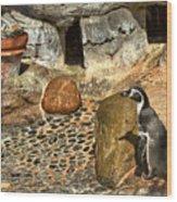Humboldt Penguin 4 Wood Print