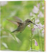 Hummer And Obedient Plant Wood Print