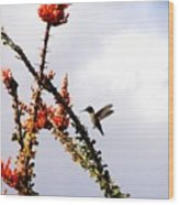 Hummer Likes Red Wood Print