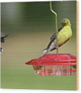 Hummer Vs. Finch 1 Wood Print