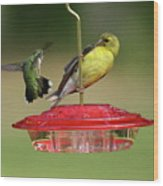 Hummer Vs. Finch 2 Wood Print