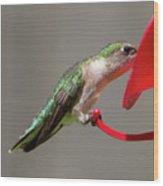 Humming Bird 10 Wood Print