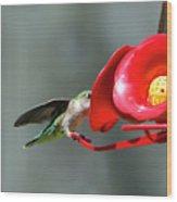 Humming Bird 6 Wood Print